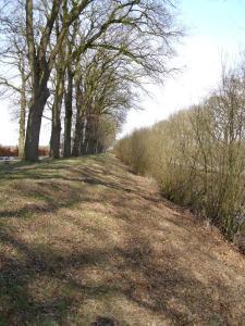 Links (hinter den Bäumen) ist die Strasse